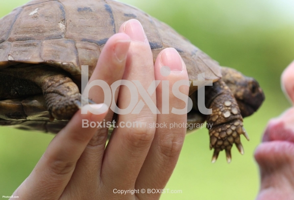 Turtle in Hand