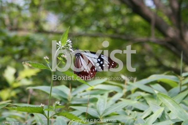 Butterfly on Green Plants