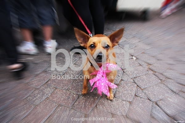 Cute Dog in the Street
