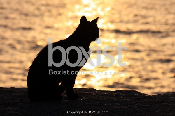 Silhouette of Cat Standing by the Sea