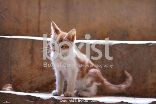 Kitten on Steps