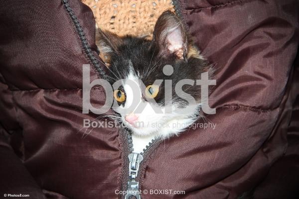 Kitten in Jacket