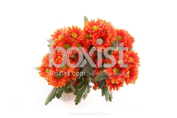 Bouquet of Orange Daisy Flowers