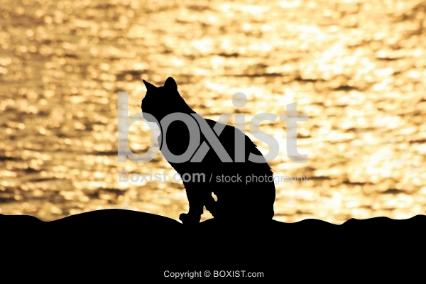 Silhouette of Lonely Black Cat at Sunset