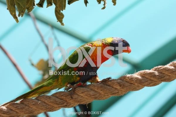 Lori Bird Walking on Rope