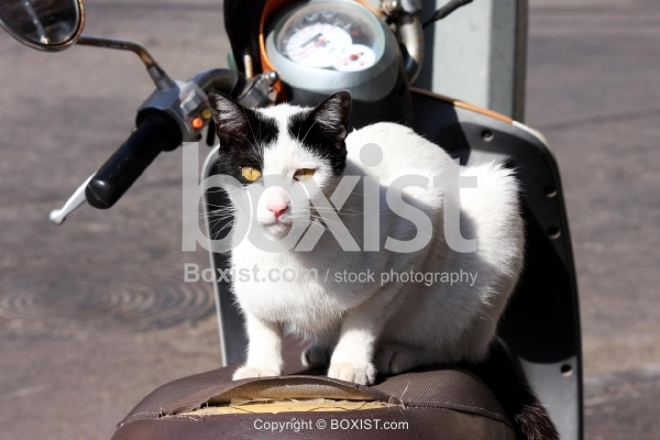 Cat Sitting on Scooter