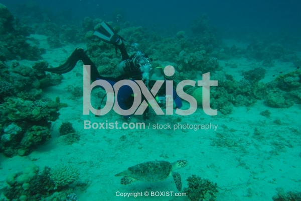Diver Photographing Sea Turtle