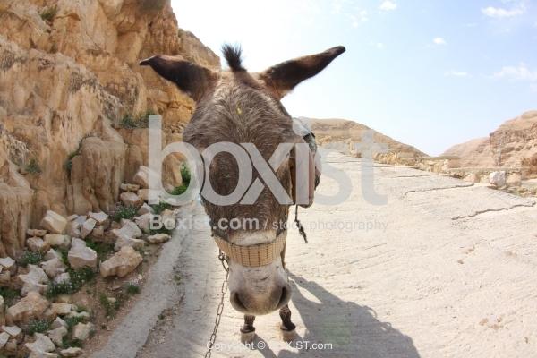 Donkey Walking Down Street