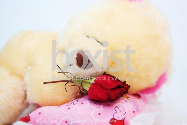 Sleeping Teddy Bear With Rose