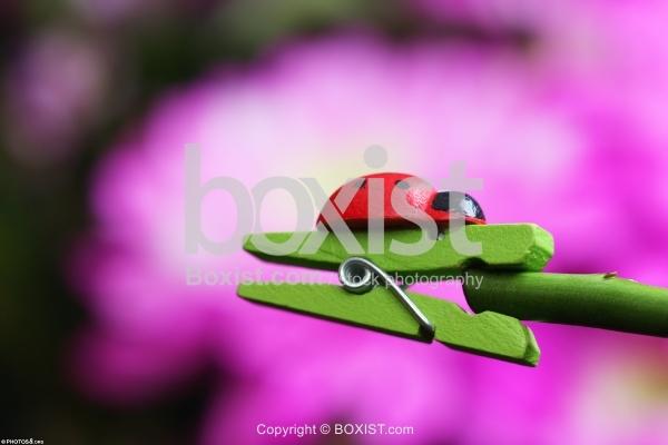 Ladybug Toy on Green Laundry Clip