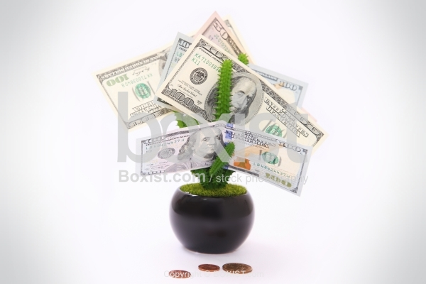 Dollars Little Tree