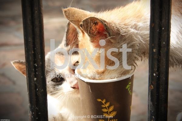 Homeless Street Cat Drinking