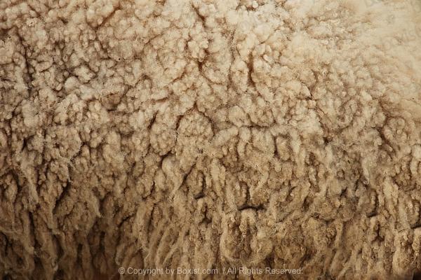 100 New Zealand Dollars Background