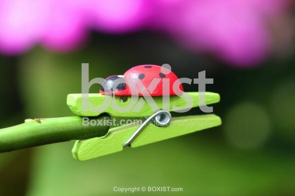 Laundry Clip With Ladybug