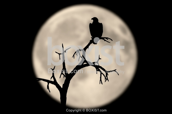 Bird and Tree In Moon Night