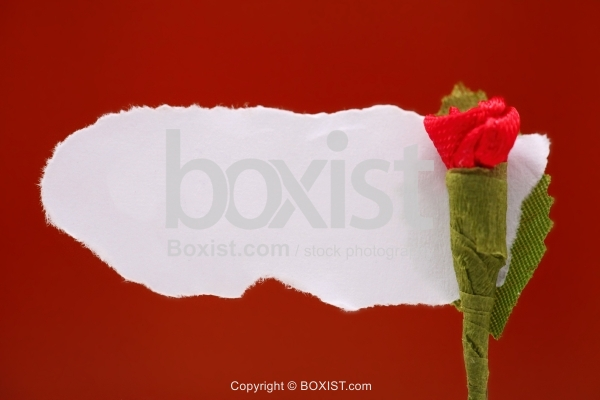 Little Rose With Torn Paper Note