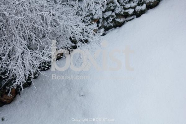 Snow on Ground and Tree