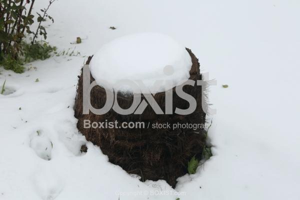 Tree Stump in the Snow