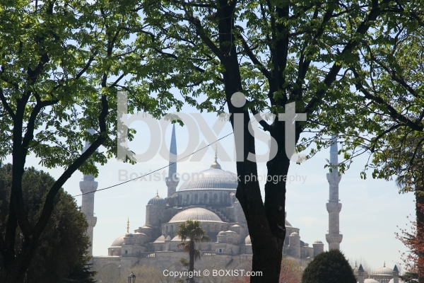 Trees with Sultan Ahmed Mosque in the Background