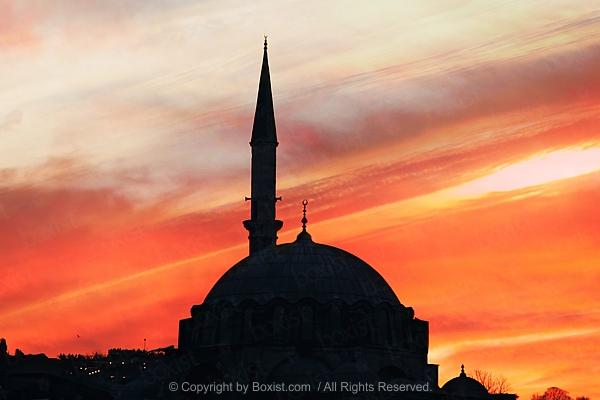 War Is Not My Language