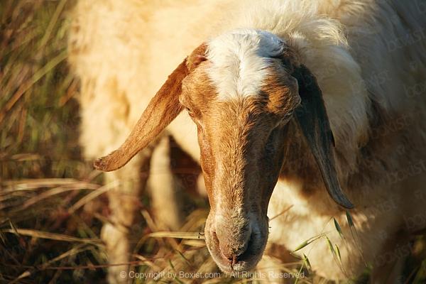 Teddy Bear on Red Silk