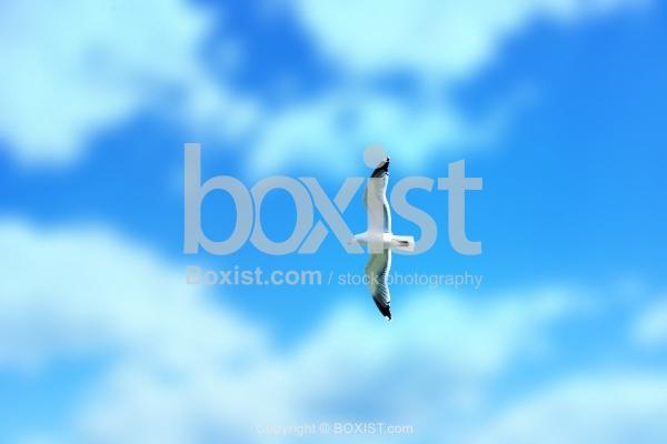Seagull On Sky