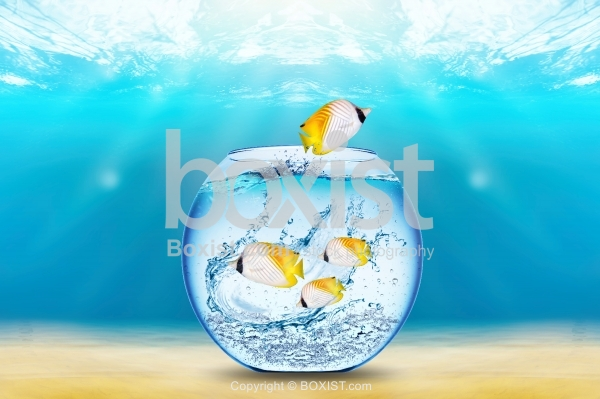 Fish Jump Out of Bowl Under The Water