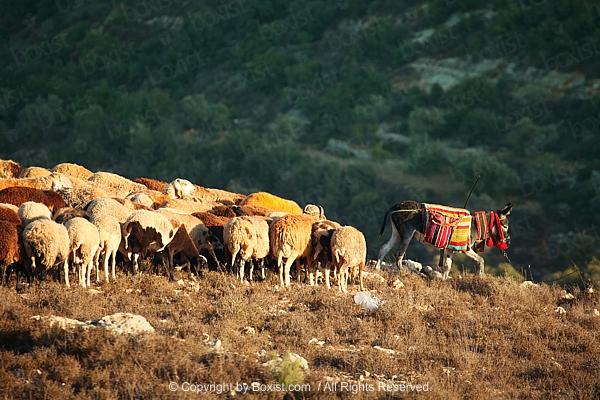 Kangaroo Jumping At Sunset