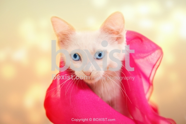 Cat Covered With Silk Cloth