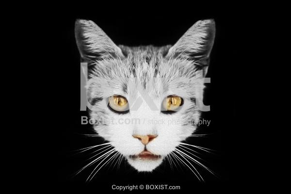 Cat Head Art Portrait