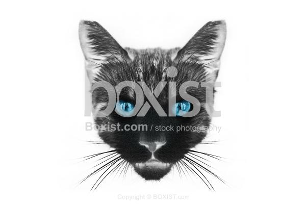 Cat Head Drawing Portrait