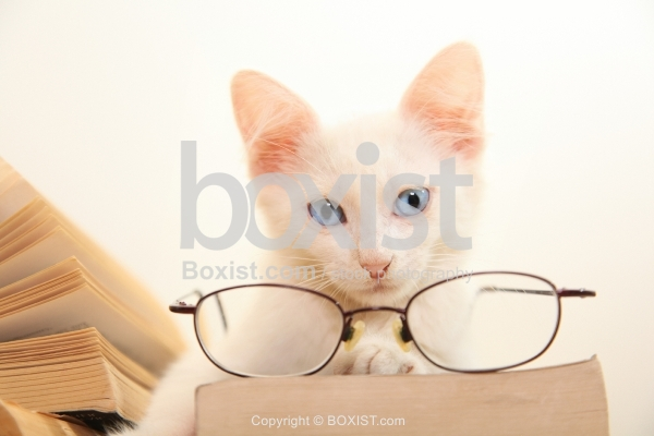 Kitten With Books And Reading Glasses