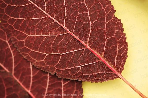 Persian Islamic Calligraphy Of The Bismillah