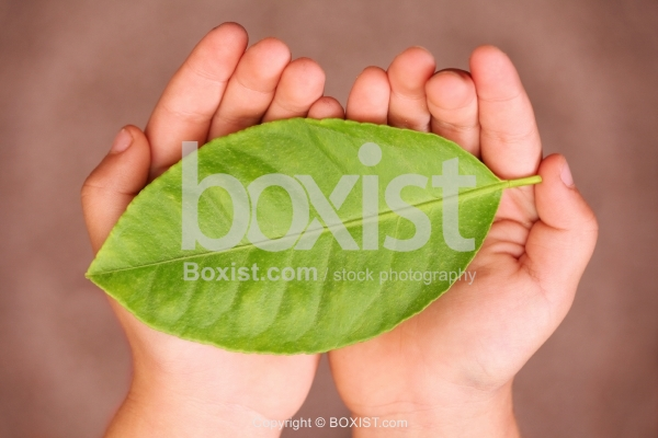 Two Hands Holding Green Leaf