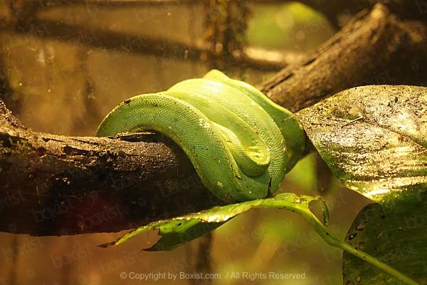 Aman Ya Fahri Alem Ottoman Arabic Calligraphy