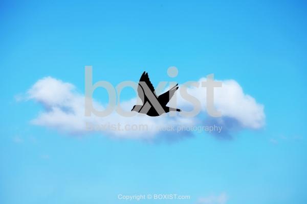 Dove Silhouette In Blue Sky