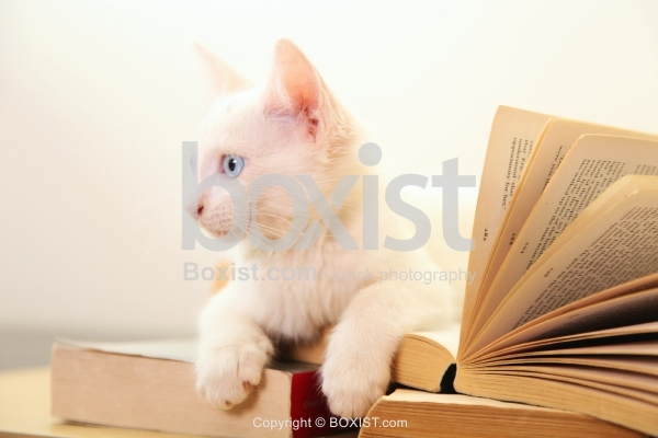 Kitten Sitting On Pile Of Books