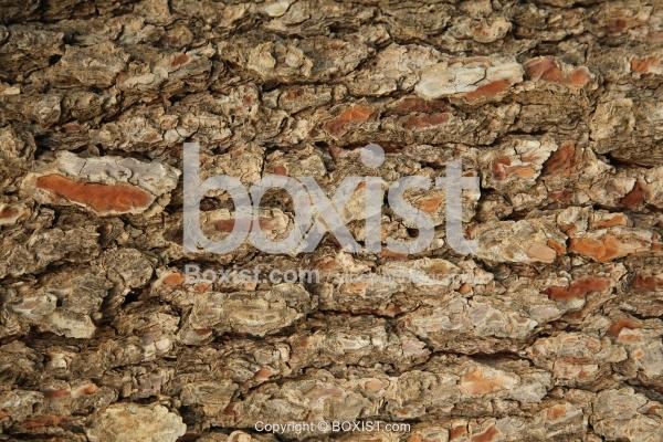 Oak Tree Skin