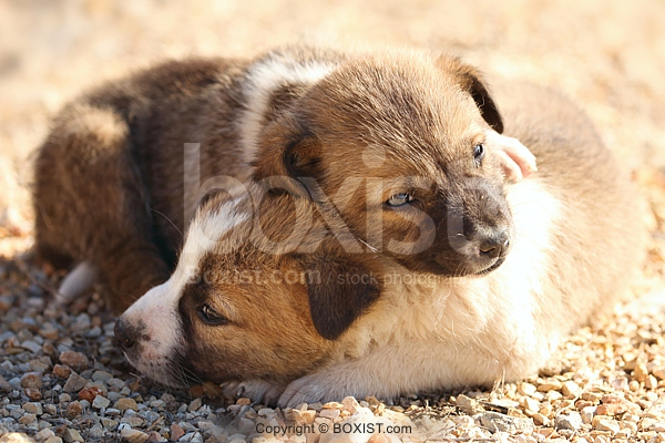 Two Puppies Sleeping Together.