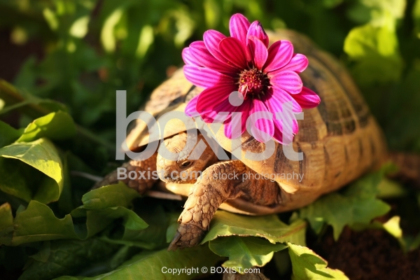 Small Turtle With Purple Flower