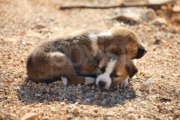 Two Puppies Lying On Top Of Each Other