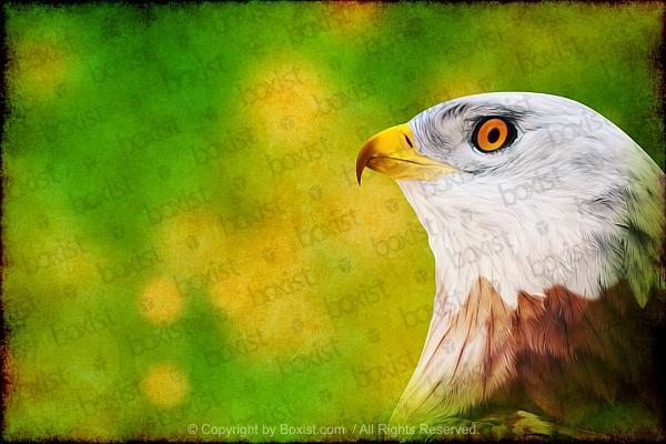 Eagle Head Painting Artwork