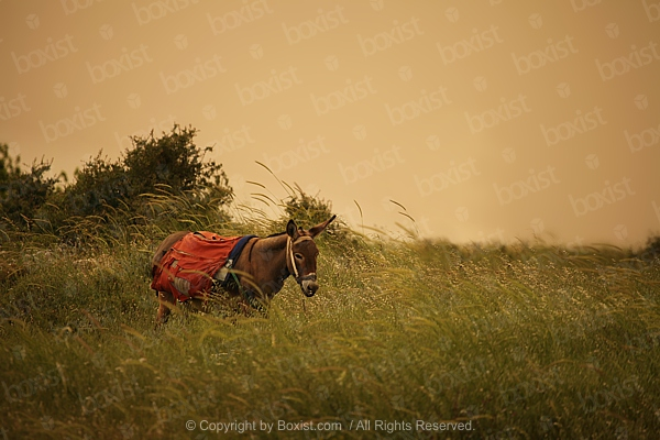 Domestic Donkey On Green Rural Field