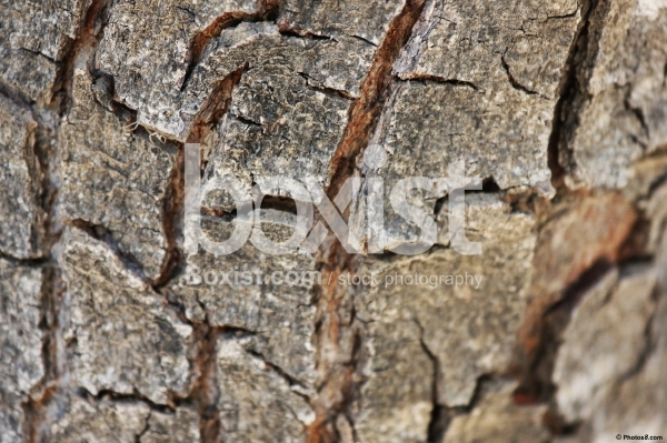 Cracked Tree Bark