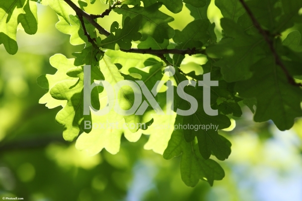 Green Tree Scenery Leaves