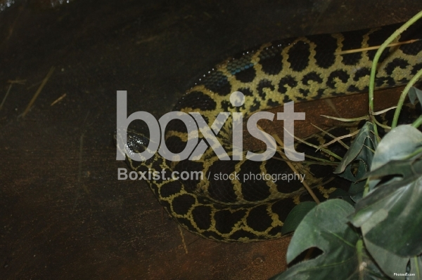 Large Yellow Snake in the Dark