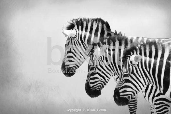 Vector of Zebras in Row